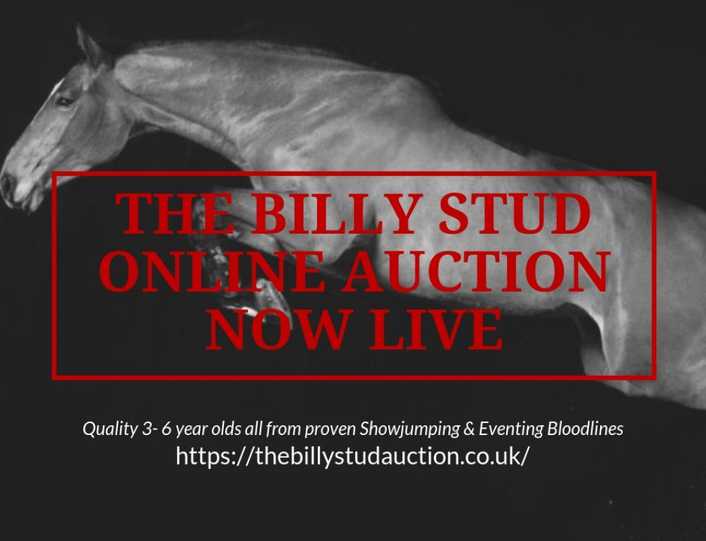 Billy Stud Online Auction now live!