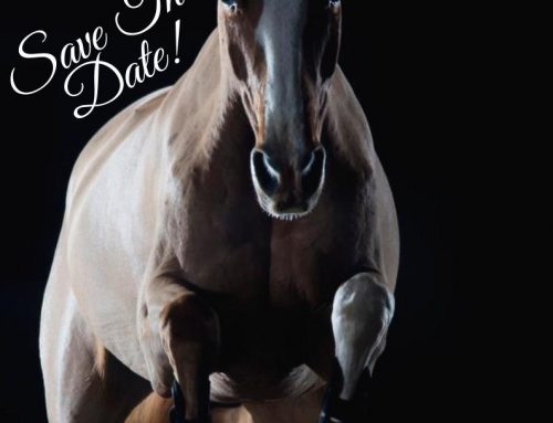 The Billy Stud Auction 2019