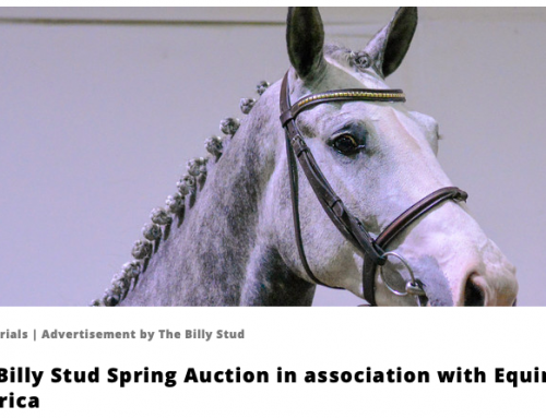 The Billy Stud Spring Online Auction features on World of Showjumping
