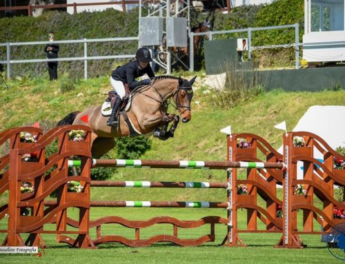 Online Auction horses impress at The Sunshine Tour